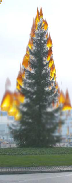 Flensburg – Sammlung der ausgedienten Weihnachtsbäume