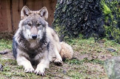 Wuff! Beratung über Hundefreilaufflächen in Flensburg erst im März