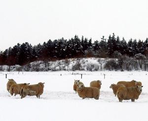 März 2013 – Flensburger Frühlingsgefühle ersticken im Schnee