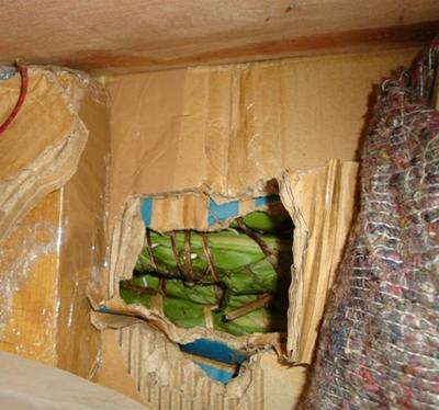 Da kannst Du lange kauen! 650 kg Khat kurz vor Dänemark sichergestellt