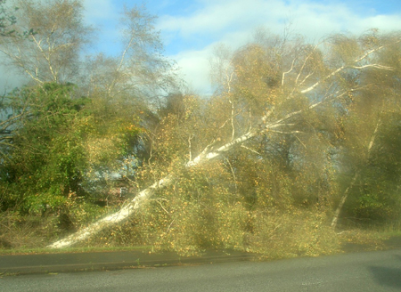 Orkan Christian – Wälder betreten verboten – Flensburg beseitigt die Schäden
