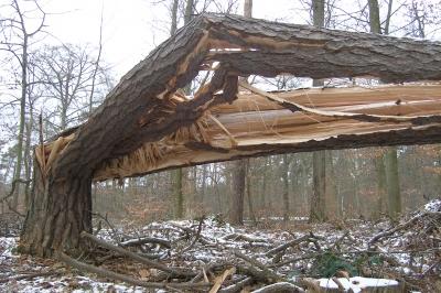 Schwere Sturmschäden in Flensburg durch Orkan Christian – Ein Toter