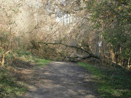 Bevor Dir ein Baum auf den Kopf fällt! Naturschutzgebiet Twedter Feld gesperrt