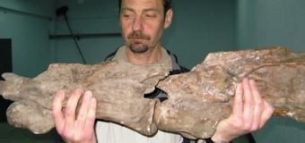 UNI Flensburg – Ein komplexes Evolutionsmodell zum Riesenwuchs bei Dinosauriern