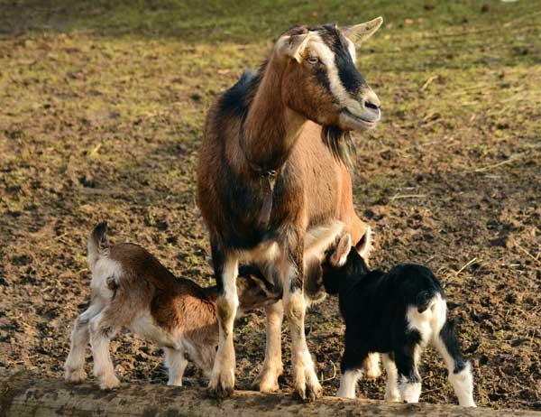 Erlebnistag im Archepark Eggebek lädt Familien zum Chillen ein