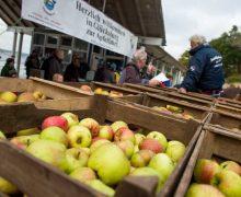 Grenzenlose Vielfalt – deutsch-dänische Apfelfahrt an der Flensburger Förde