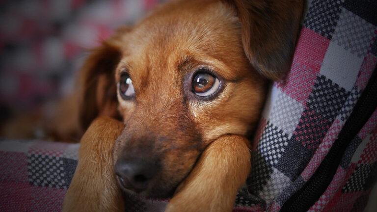 Hundekrankenversicherung – sinnvoll oder verlorenes Geld?